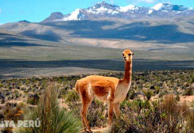 Descubriendo Perú – 11 Días