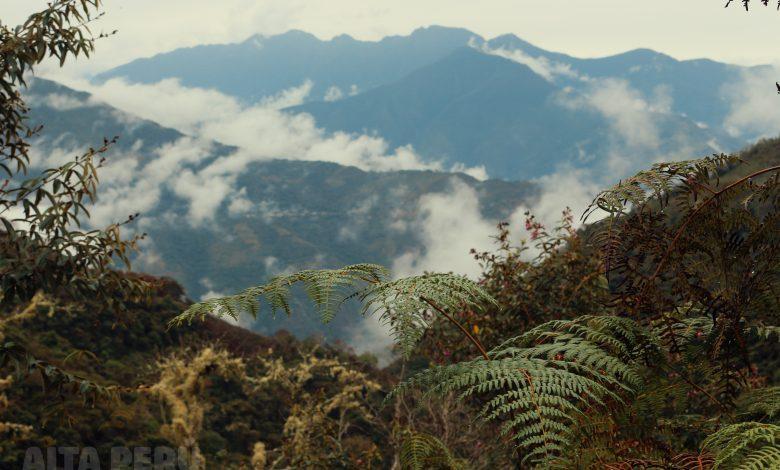 view-of-jungle-inca-trail